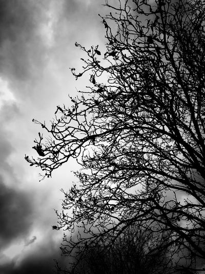 Trees and sky. Tree Low Angle View Sky Nature Cloud - Sky Growth Branch No People Day Outdoors Tranquility Beauty In Nature Welcome To Black