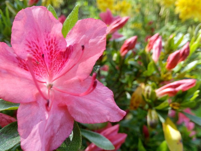 Summertime Flowers Vibrant Color Life Is Beautiful Freshness Sunny Day Alive  Nature Photography