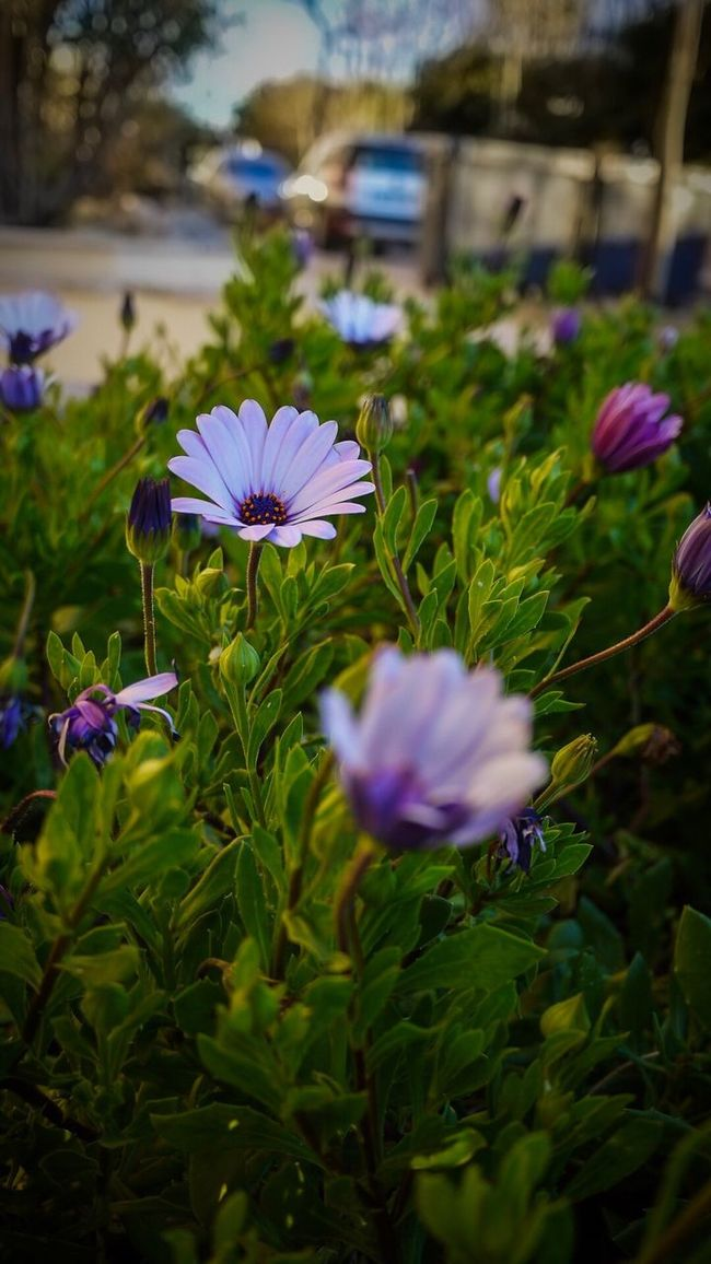 Flowers Focus Object Flowers,Plants & Garden Flower Collection Colorful Nature EyeEm Nature Lover EyeEm Gallery EyeEm Best Edits The Great Outdoors - 2016 EyeEm Awards The Great Outdoors With Adobe Close-up Green Color Flower Plant Fragility Nature Petal Beauty In Nature Flower Head Growth Freshness Purple Blooming Outdoors No People Day Crocus