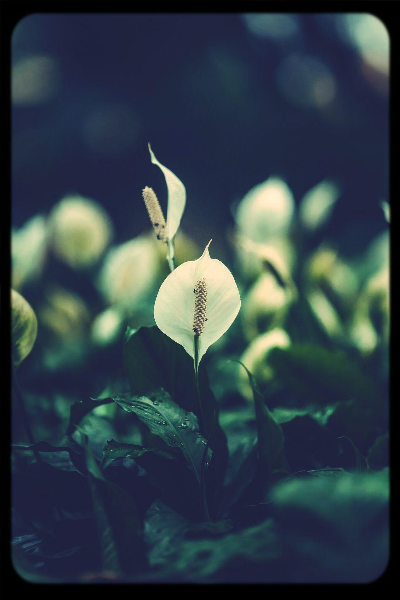 Beautiful flowers MyFlowers