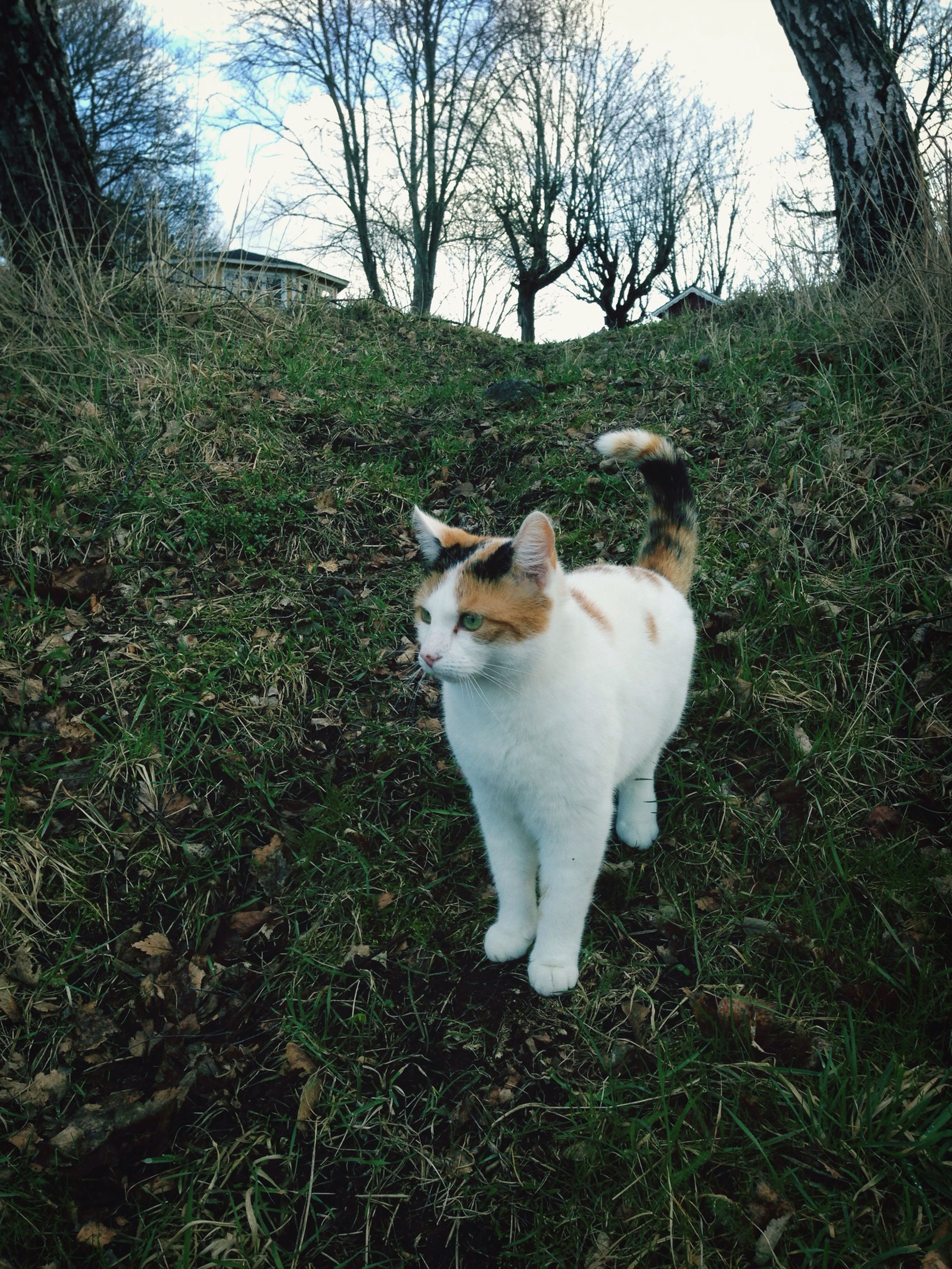 domestic animals, pets, mammal, animal themes, one animal, grass, dog, field, domestic cat, grassy, cat, standing, nature, tree, day, full length, outdoors, no people, sunlight, growth