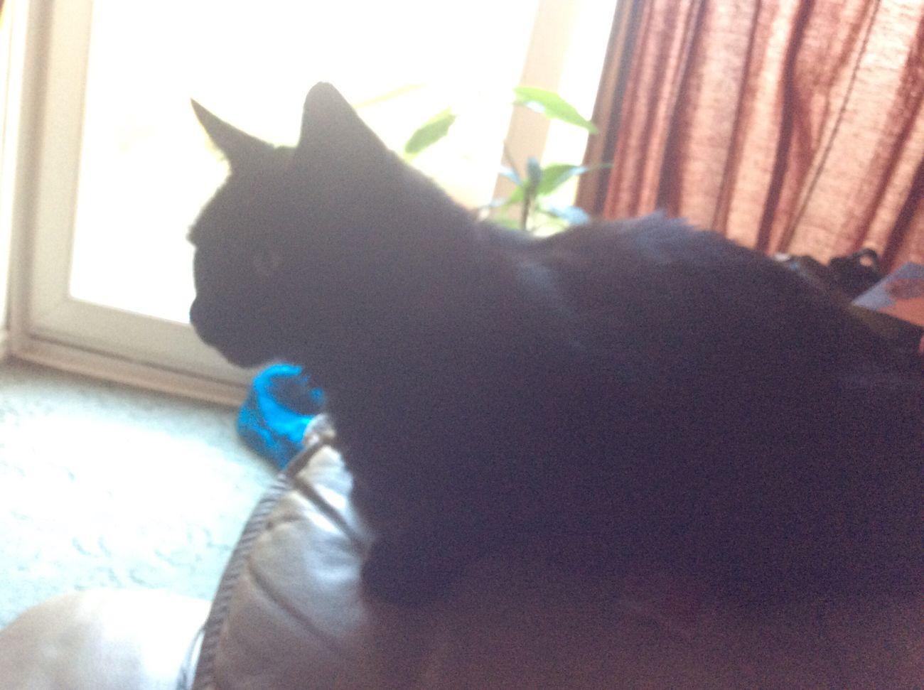 Catoftheday Cats Of EyeEm Cats Domestic Cat Feline Indoors  Pets BLackCat
