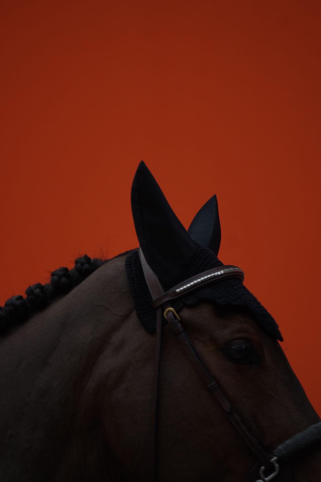 Close-up Detail EyeEmNewHere Horse Orange Piano Moments Profile The Week On EyeEm Fresh On Market 2017