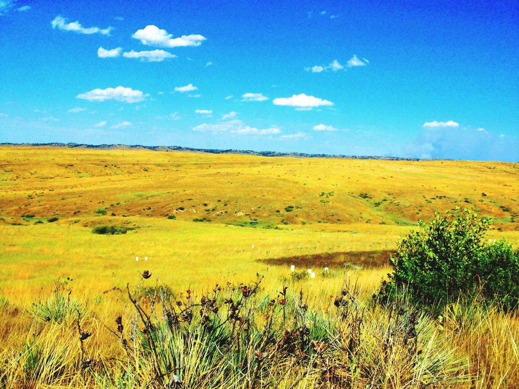 Landscape Landscape Nature Sky Grass Beauty In Nature Field Scenics Day Outdoors Tranquility No People Tranquil Scene Cloud - Sky Tree Summer Views Summer ☀ Little Big Horn Custer's Last Stand Little Big Horn National Monument Finding New Frontiers