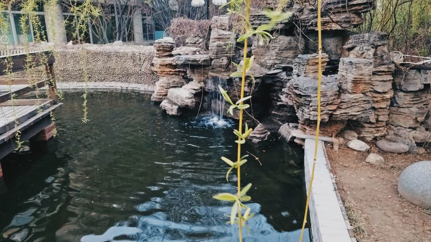 Water Day Beauty In Nature Tree Outdoors Watermill Nature Plant Growth