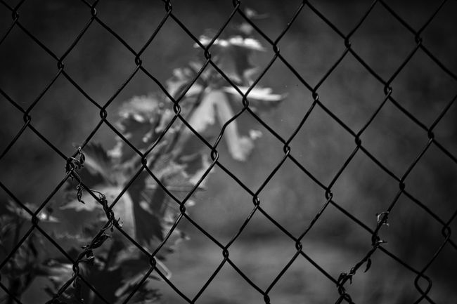 Beauty In Nature Behindthefence Black & White Black And White Black And White Photography Blackandwhite Blackandwhite Photography Chainlink Fence Close-up Day Dreamy Fence Focus On Foreground Metal Nature No People Outdoors Pattern Protection Safety Security Shadow Silhouette Streetphotography Wine