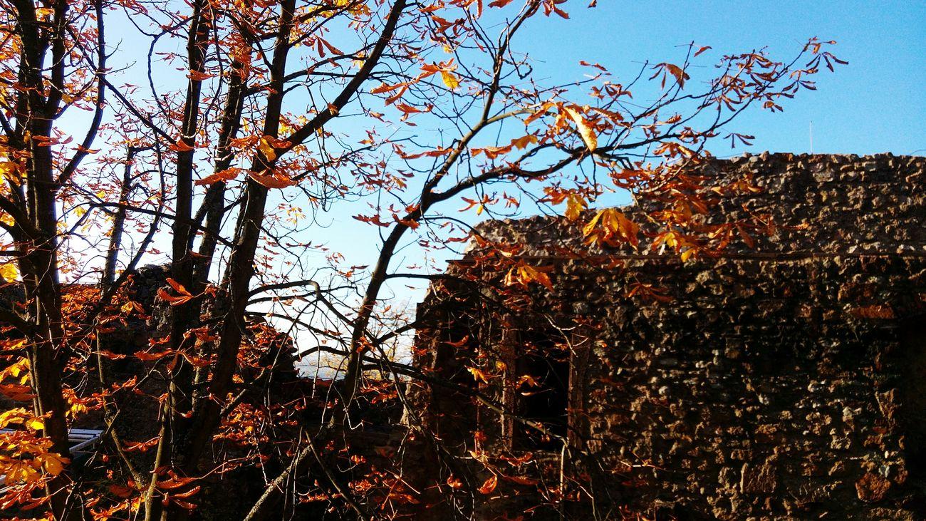 Tree Outdoors Multi Colored Mountain Autumn Mood Autumn Autumn Colors Nature Autumn🍁🍁🍁 History Weinheim Castle Architecture Autumn Colours Landscape