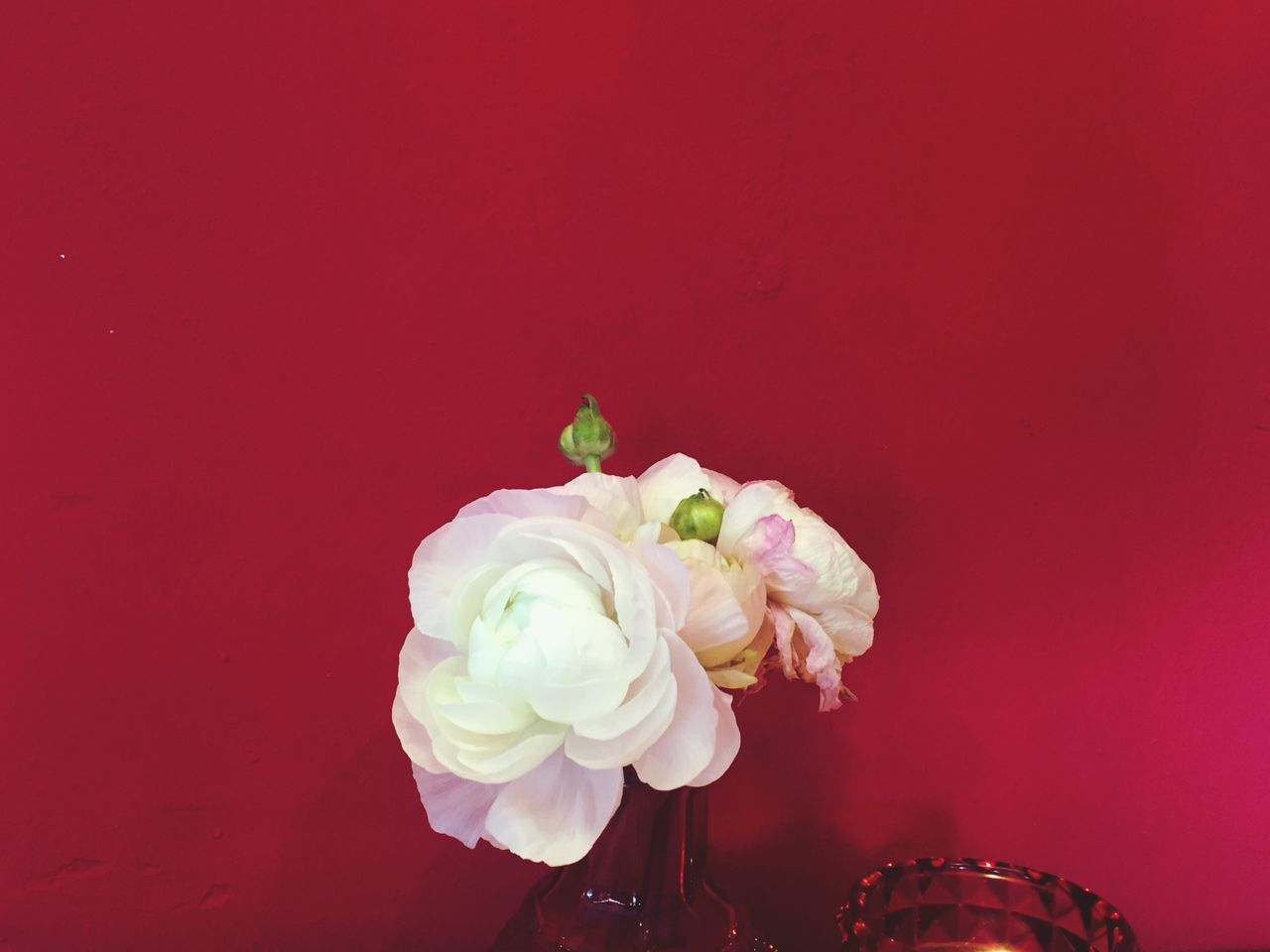 Flower Freshness Rose - Flower Studio Shot Fragility Petal Red Background Close-up Nature Beauty In Nature No People Flower Head Day Ranunculus Decor Decoration Vase Coffee Table