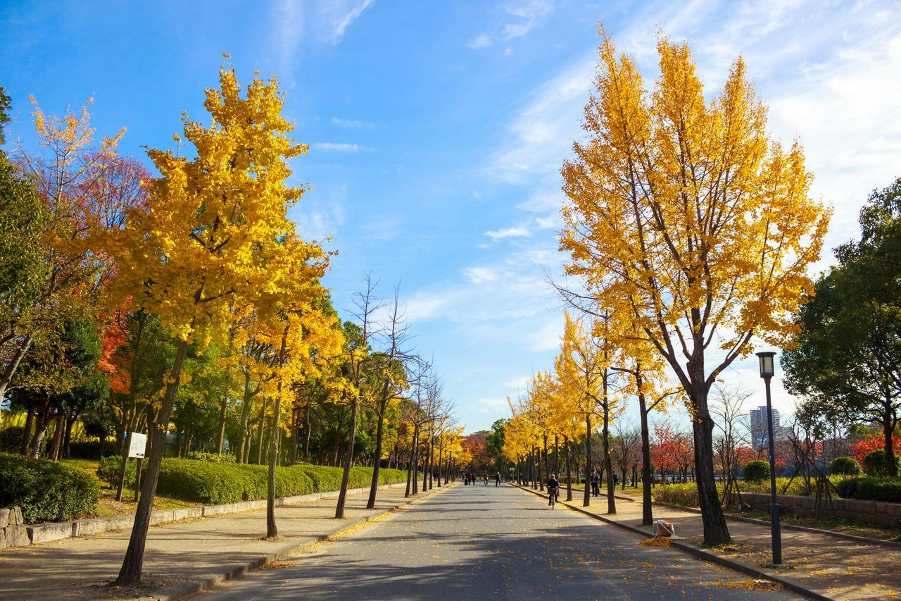 Taken in Osaka Castle. Autumn Beauty In Nature Day Outdoors Path Paths Pathway Pathways Road Scenics Tree