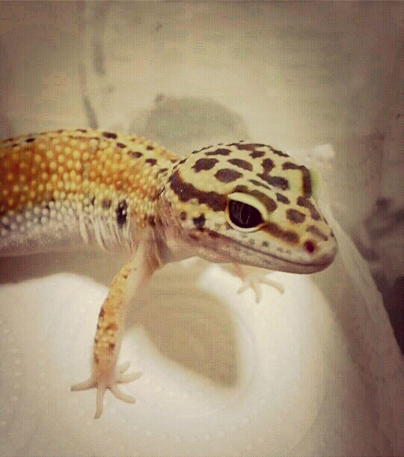 Spotty..cute. Enjoying Life