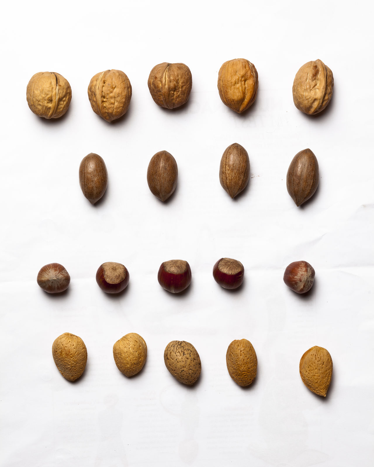 Almond Beauty In Nature Brainfood  Brown Close-up Day Food Food And Drink Form Freshness Hazelnut Hazelnuts Healthy Eating Healthy Food Healthy Lifestyle Nature_collection No People Nut - Food Nutricient Paranut Shape Studio Shot Walnut White Background