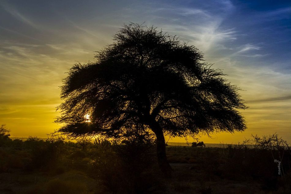 Hanging Out Taking Photos Check This Out Hello World Relaxing Hunting Libya Saharadesert Tree Sunset McBayoow