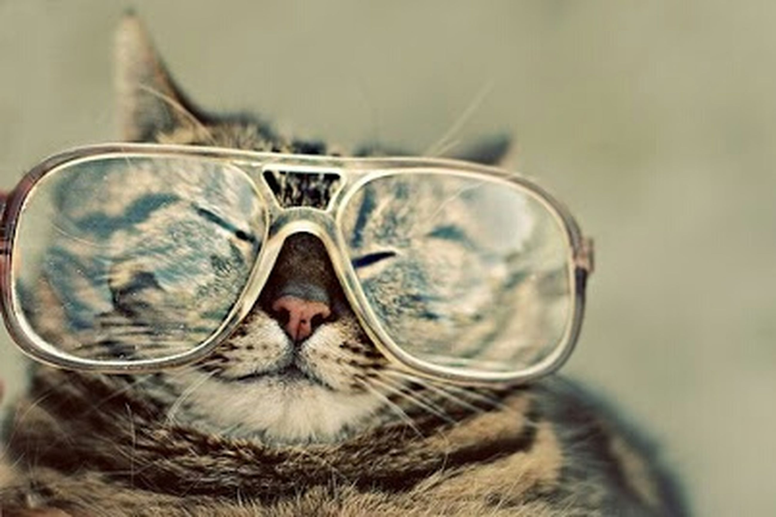 close-up, domestic animals, sunglasses, one animal, animal themes, focus on foreground, mammal, reflection, pets, one person, part of, day, transparent, animal body part, selective focus, glass - material, looking at camera, portrait, outdoors, sunlight