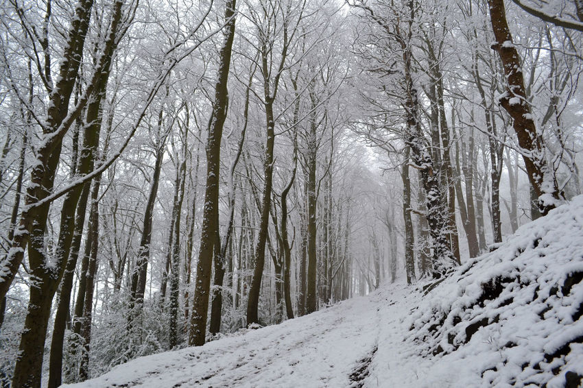 Bare Tree Beauty In Nature Belper Branch Cold Temperature Day Derbyshire England Forest Forest Photography Nature No People Outdoors Scenics Snow Snowing Tree Winter Woods