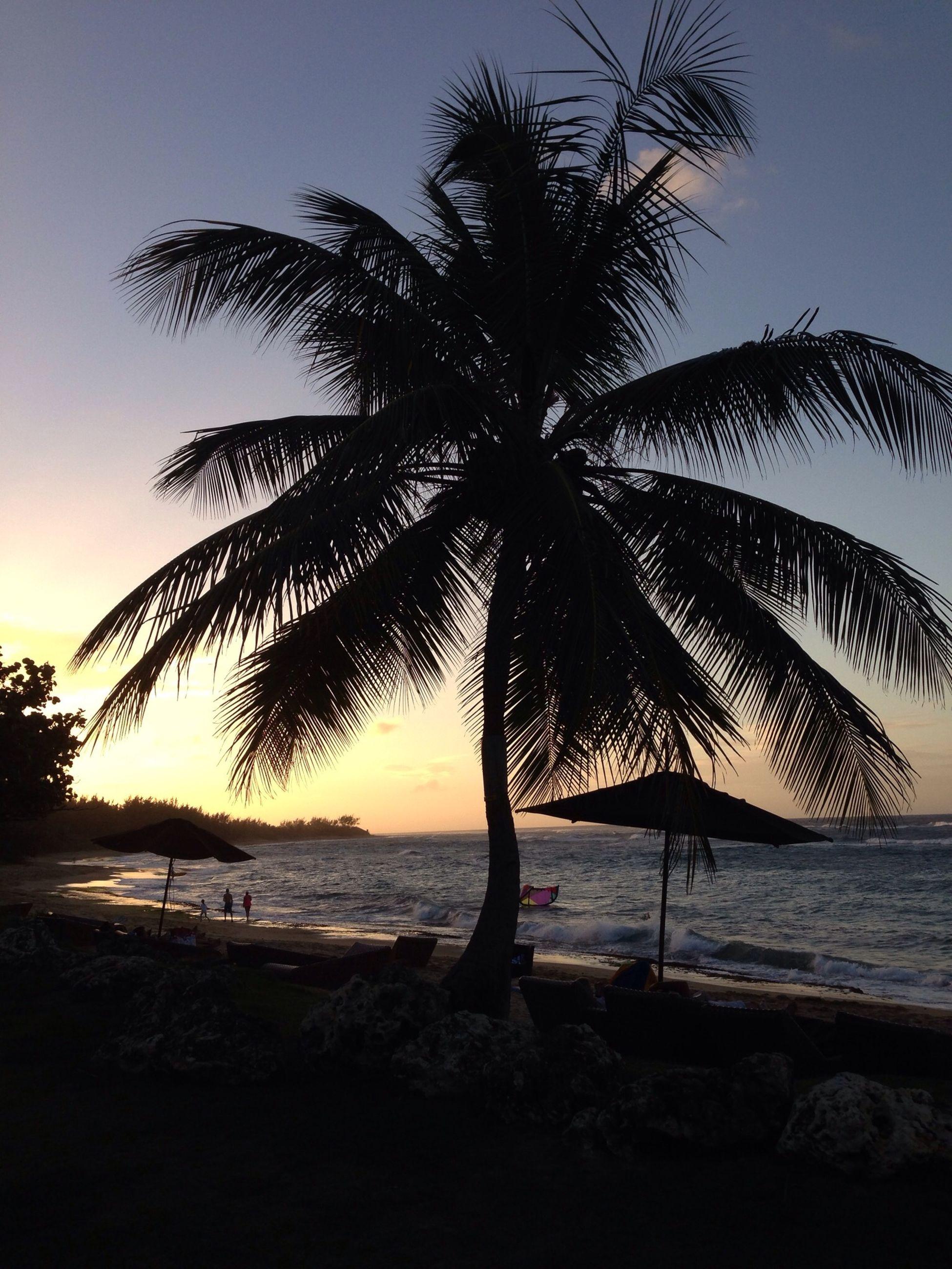No Filter Puerto Rico Palms Enjoying Life