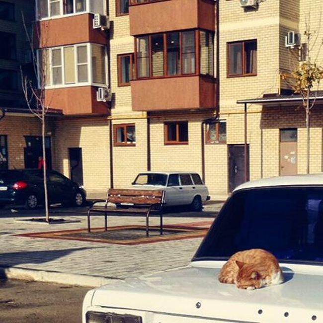 """Выхожу во двор к машине, а там найкборзов звучит🎵🌞 ПыСы. А """"четверка"""" чётпадазрительна 😑 Wigandt_photo Wigandt Kzoom мойдвор котэ кот кошки утро утродобрымбывает лучсолнцазолотого тепло осень Autumn Cats Catlovers Instacst кошатник РыжийКот наработу ваз Instagramcats Catstagram Sunshine morning instamorning onthejob кошкалежитнакапотемашины"""