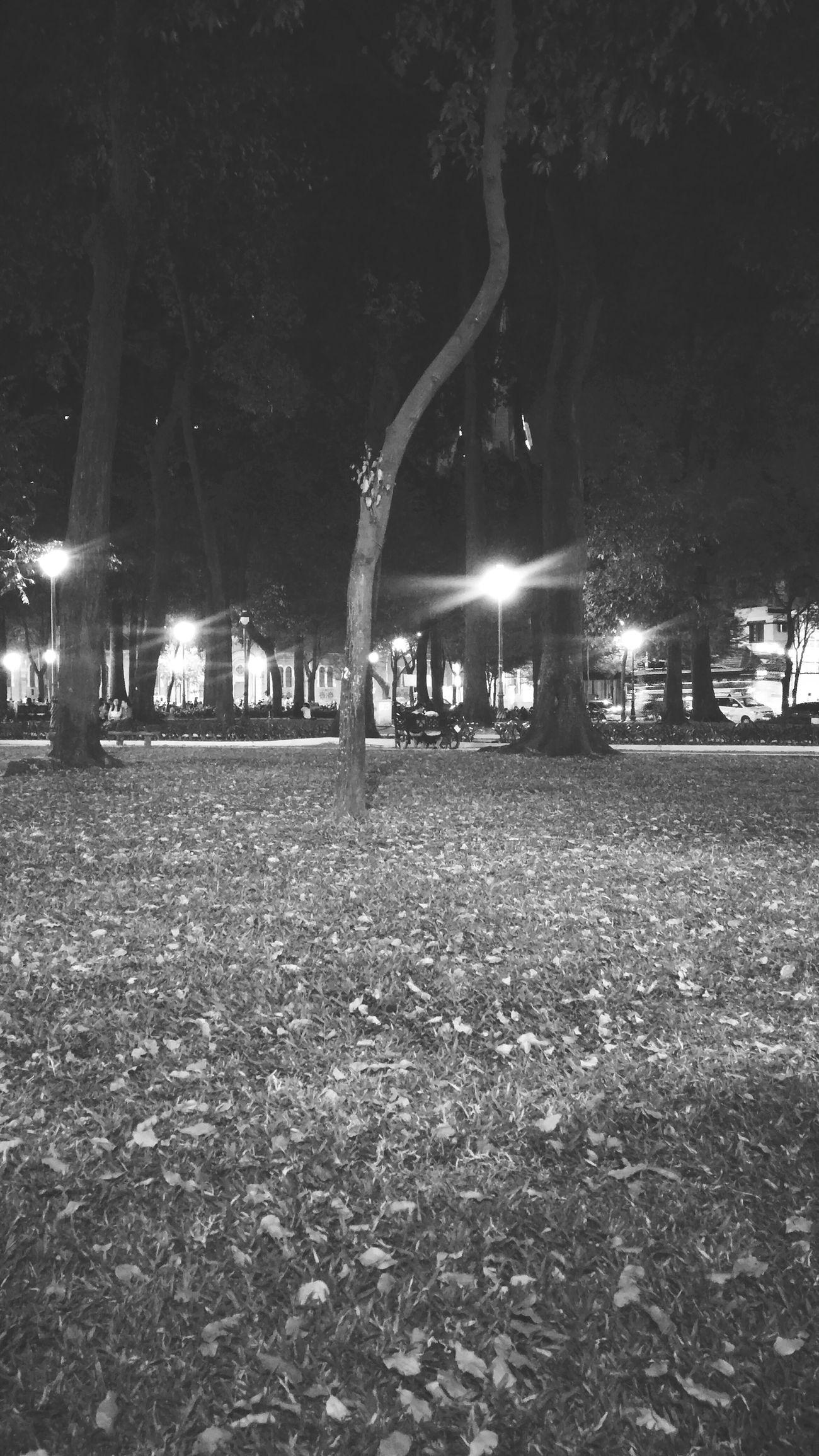 Grass Nightphotography Feelings Friends