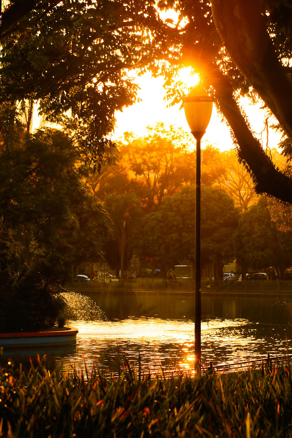 Beauty In Nature Flag Flares Glowing Growth Guarulhos Idyllic Illuminated Lago Dos Patos Lighting Equipment Nature No People Outdoors Reflection Scenics Sky Street Light Sunset Tranquil Scene Tranquility Tree Water