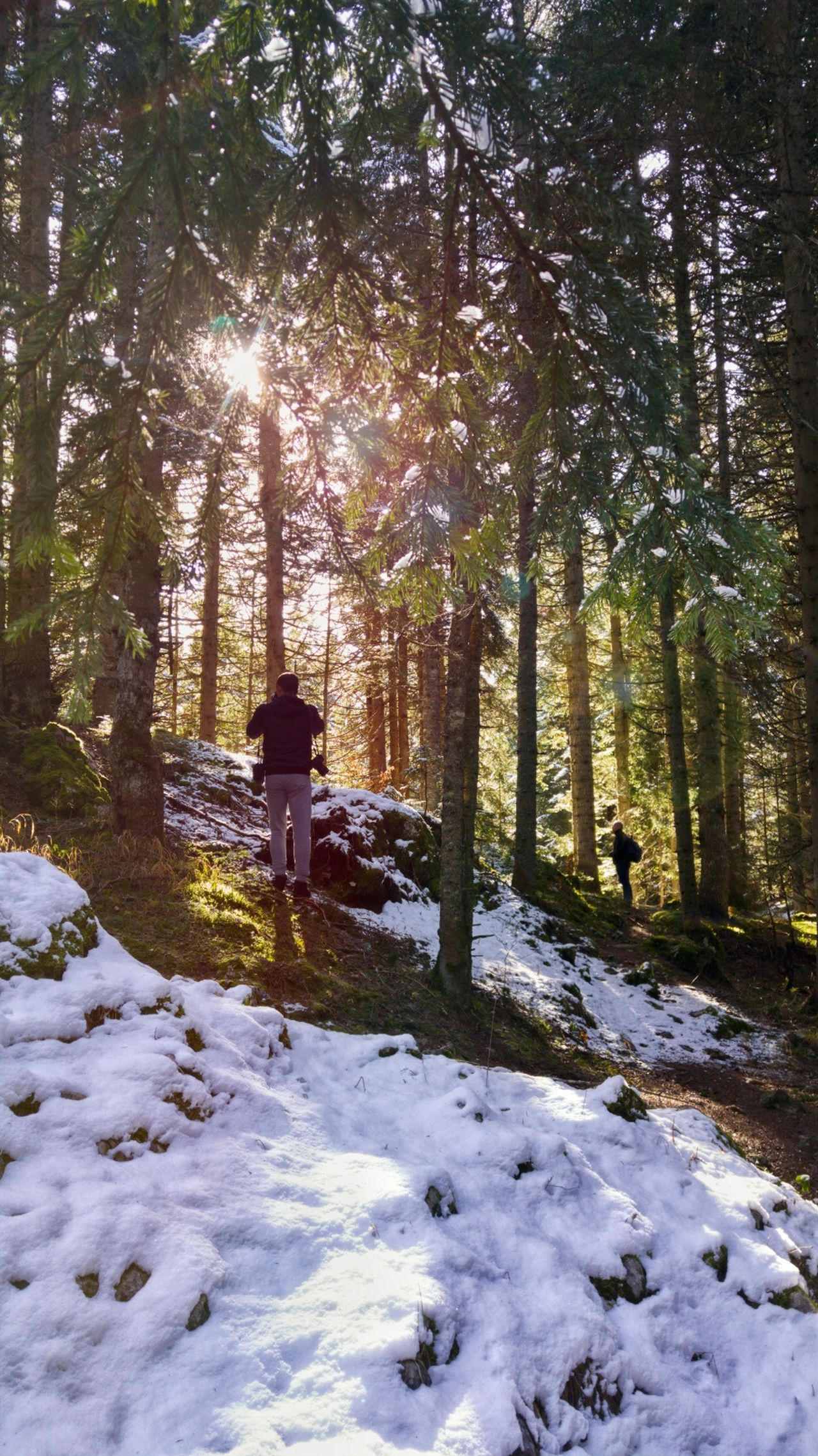 Tourists travel to winter forest with sunlight. Winter vacations. Beauty In Nature Cold Temperature EyeEm Best Edits EyeEm Best Shots EyeEm Best Shots - Nature EyeEm Nature Lover EyeEm Travel Photography Forest Forest Photography Landscape Nature Outdoors Pine Forest Scenics Snow Sunlight Sunlight Tourism Tourists Tree Winter Winter Trees