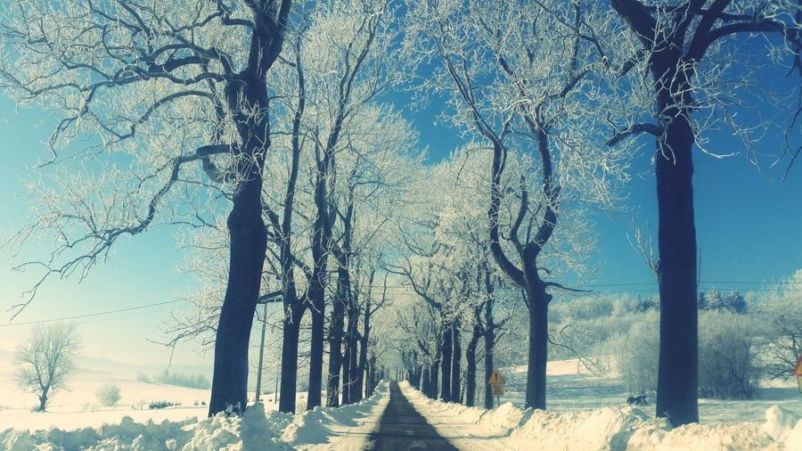 Clear Sky Nature Tree Sky Beauty In Nature Good Morning! Sun Snow❄⛄ Winter Sun Winter Day Scenics Road To Nowhere Roadscenes Roadtrips Tree_collection  Day sunset #sun #clouds #skylovers #sky #nature #beautifulinnature #naturalbeauty photography landscape Sun_collection No People Beauty In Nature Escaped