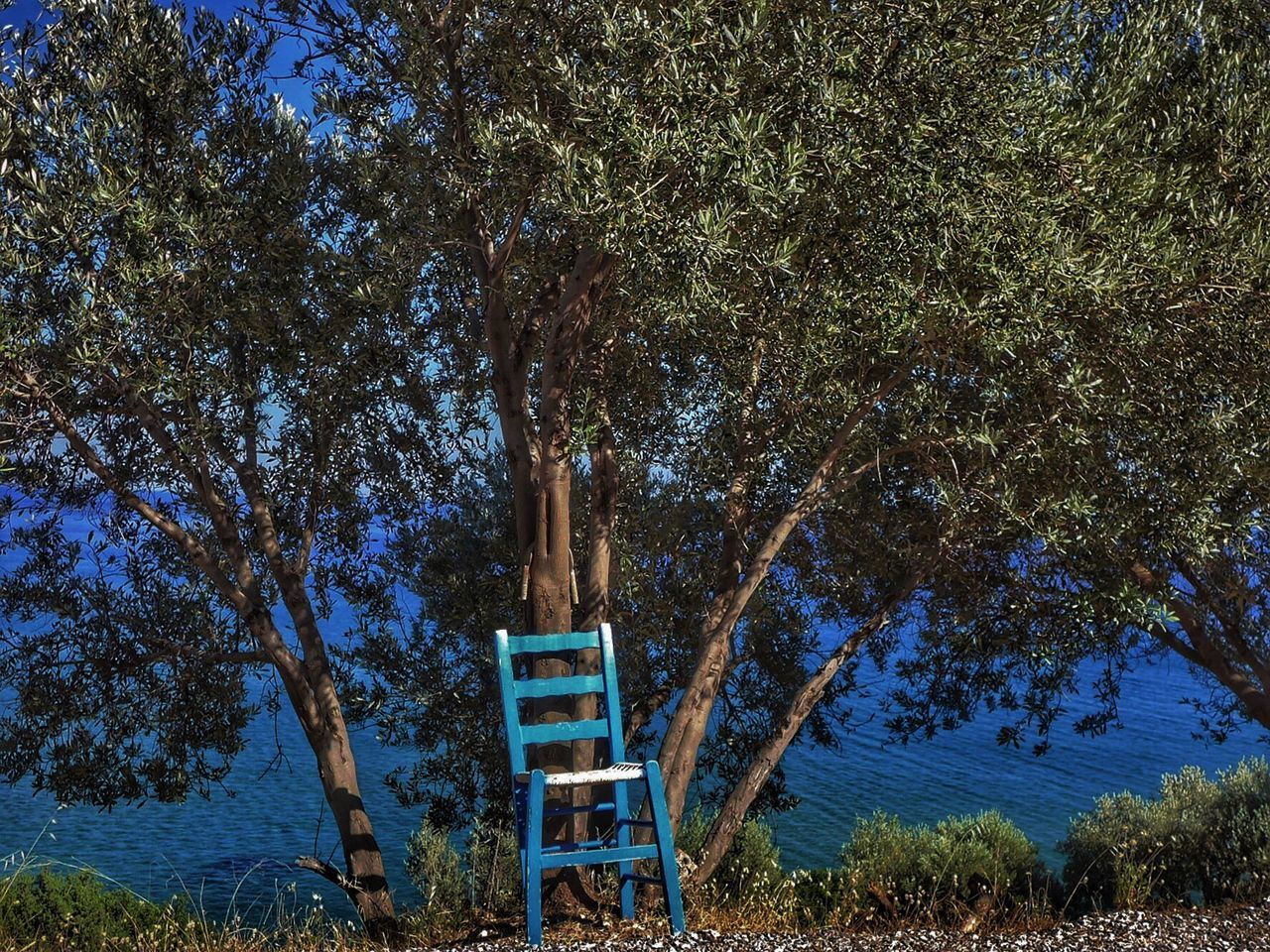 Empty Chair Against Trees By Sea