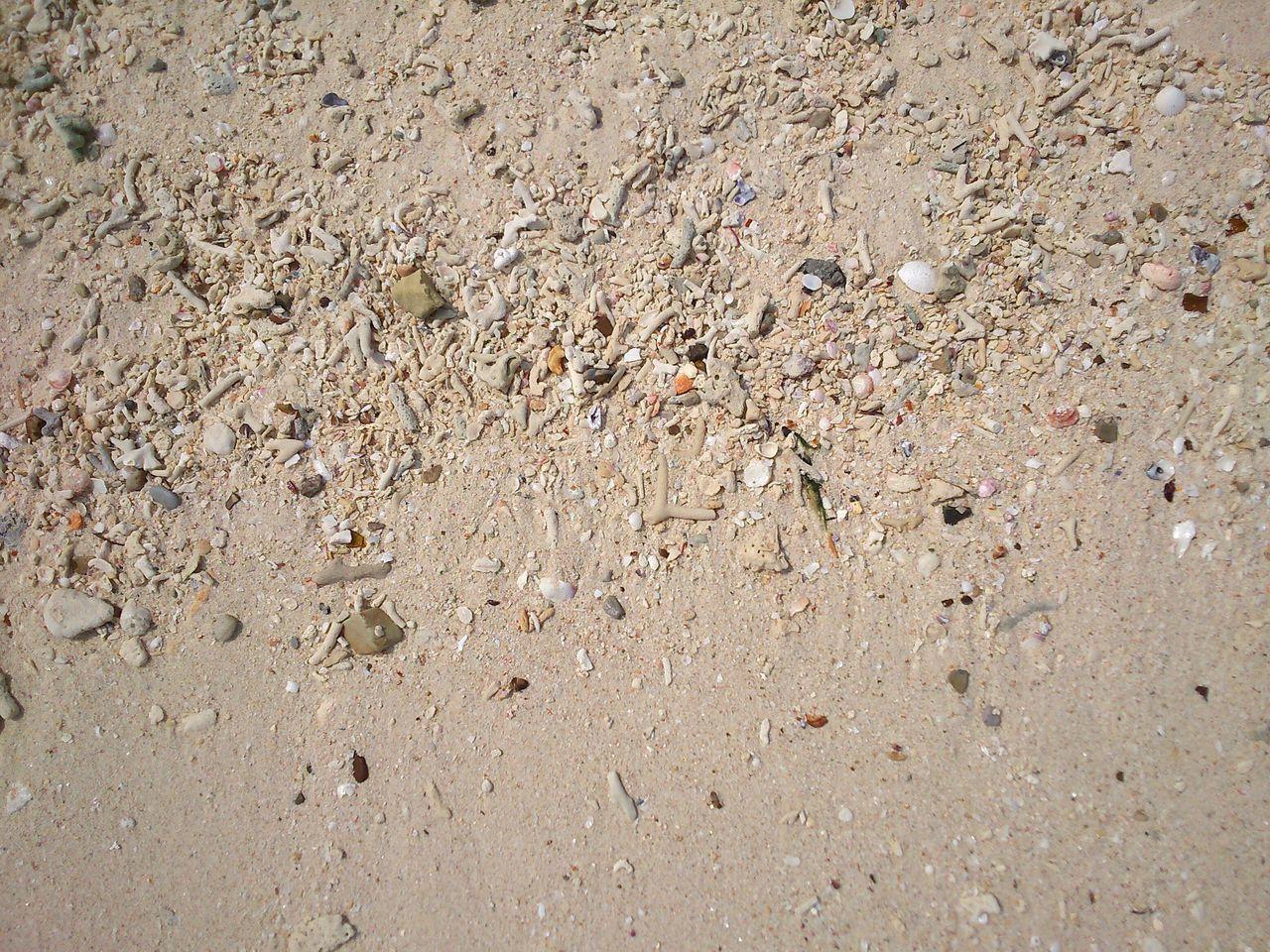 White Sand Beach Coral Sand