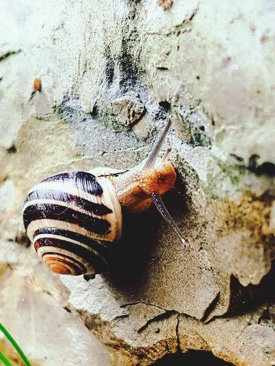 Snail Small Animal Reptile Snail Shell Crawl After Rain Slowly Nature Animal Animal Photography