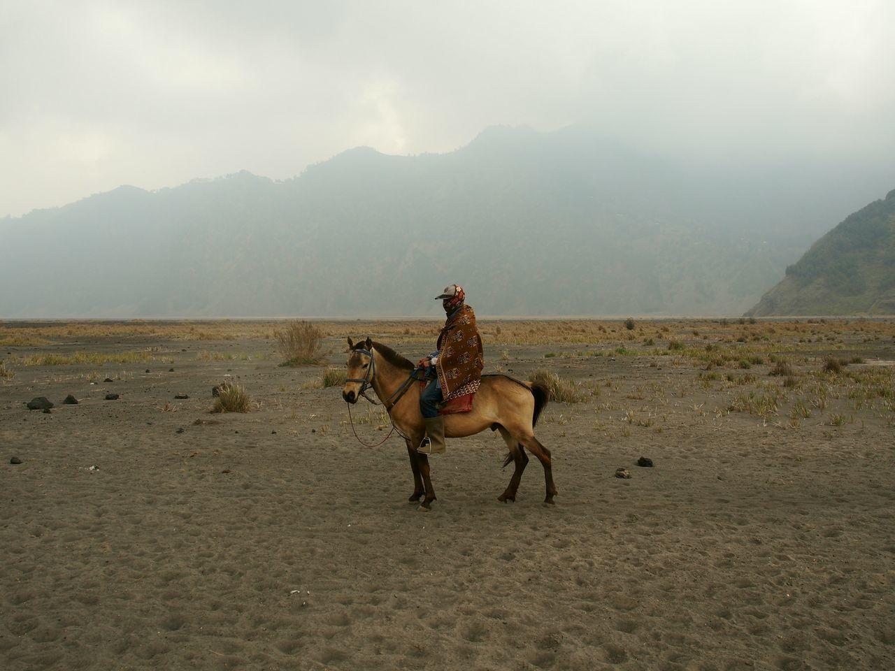 horse, domestic animals, working animal, animal themes, mountain, mammal, sky, nature, day, fog, landscape, transportation, outdoors, mountain range, sand, livestock, no people