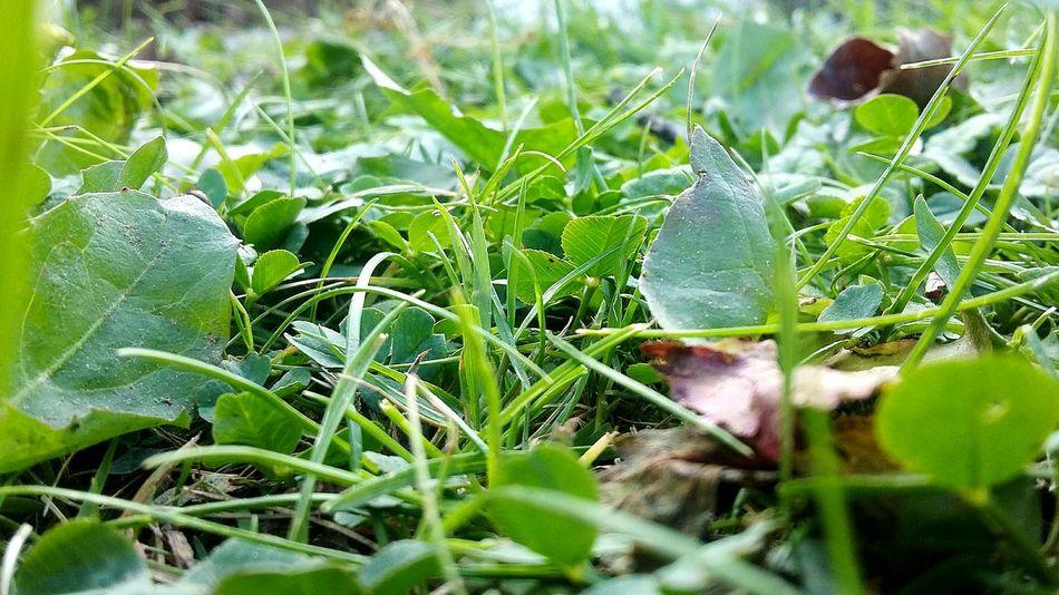 Hey✌ Green Green Green!  Grass Zielonomi Leafs 🍃 Sunnyday