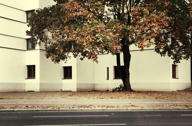 Architecture Autumn Urban Geometry Urban Landscape
