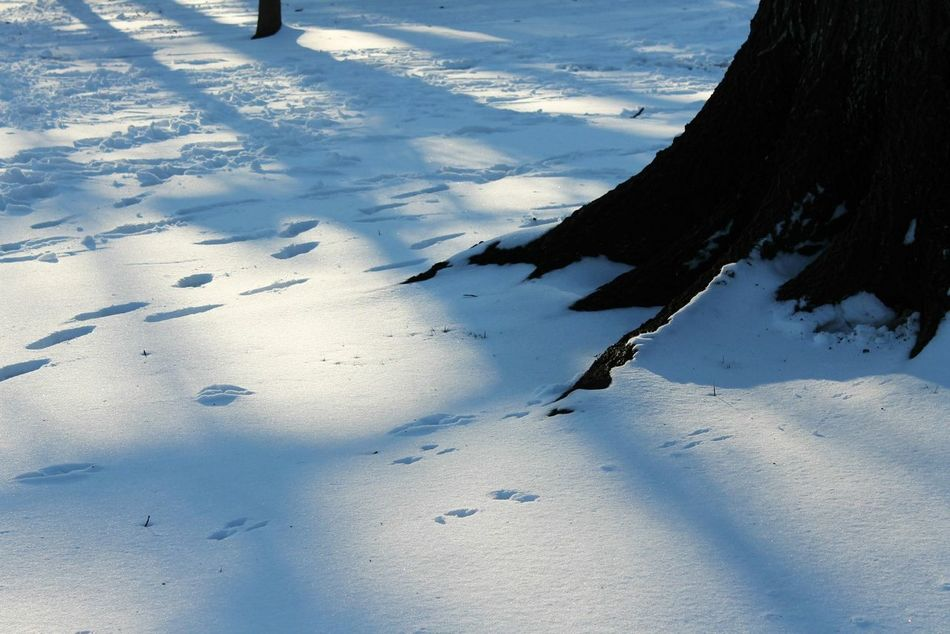 Snow Snow ❄ Snowing