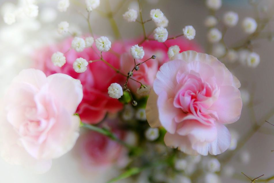 Beautiful stock photos of muttertag, Beauty In Nature, Bouquet, Close-Up, Flower