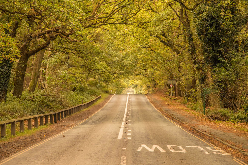Delamere Forest Nature No People Outdoors Road Scenics The Way Forward Transportation Tree