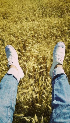 Golden Wheat Field Wheatgrassshots Nature_perfection Nature_collection Landscape_collection EyeEmNatureLover Nature Lover Fields Of Gold Fieldsofgold Shoesaddict Shoeslover Jeanslover Jeans Brown Photography Long Goodbye Farmlandscape EyeEm Nature Lover EyeEm Best Shots No People Outdoors Gold Colored White Color White 😚 Crop  Chandigarh India The Portraitist - 2017 EyeEm Awards The Portraitist - 2017 EyeEm Awards The Photojournalist - 2017 EyeEm Awards The Great Outdoors - 2017 EyeEm Awards The Street Photographer - 2017 EyeEm Awards The Architect - 2017 EyeEm Awards Break The Mold EyeEmNewHere EyeEmNewHere