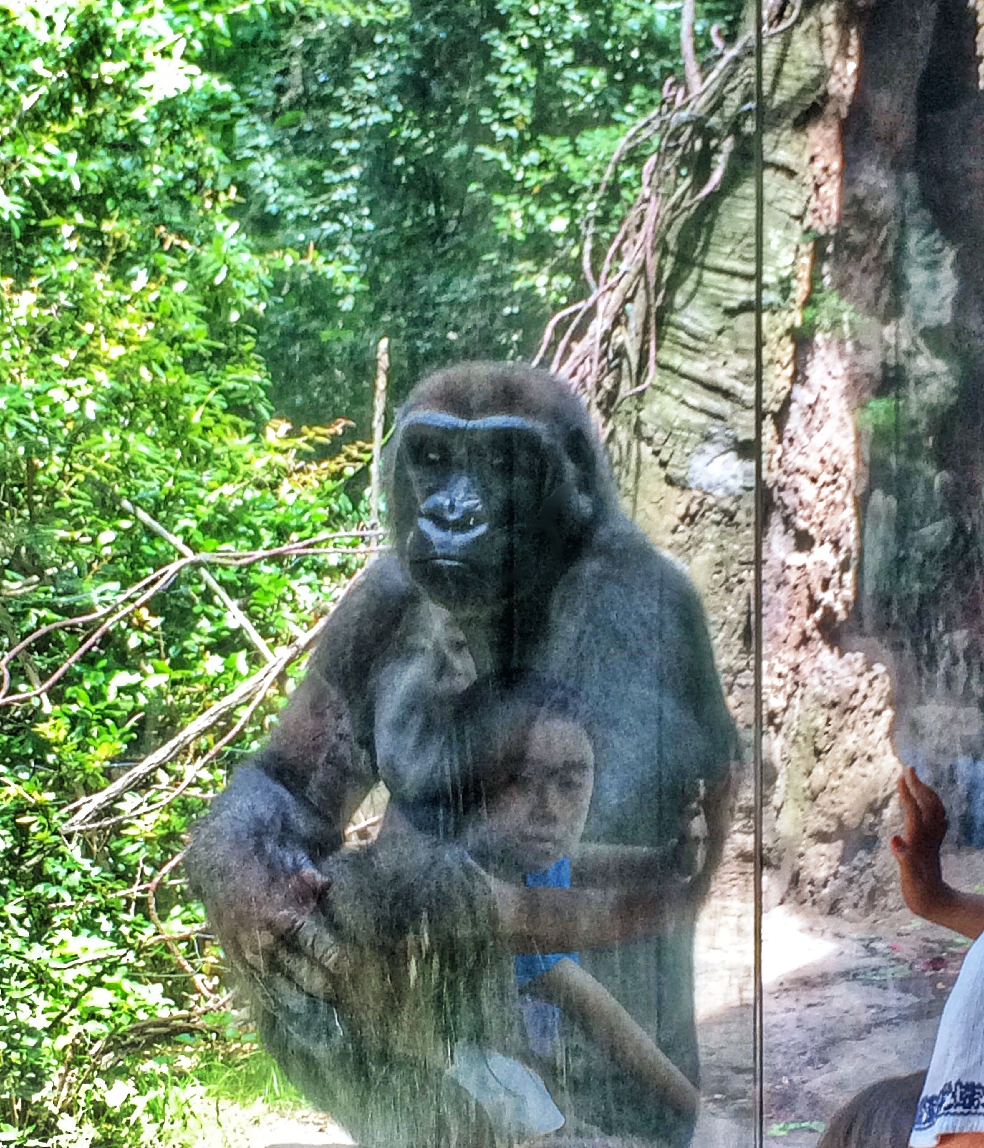 animal themes, tree, mammal, one animal, wildlife, forest, animals in the wild, sitting, monkey, zoo, tree trunk, relaxation, outdoors, primate, day, nature, portrait, looking at camera, branch