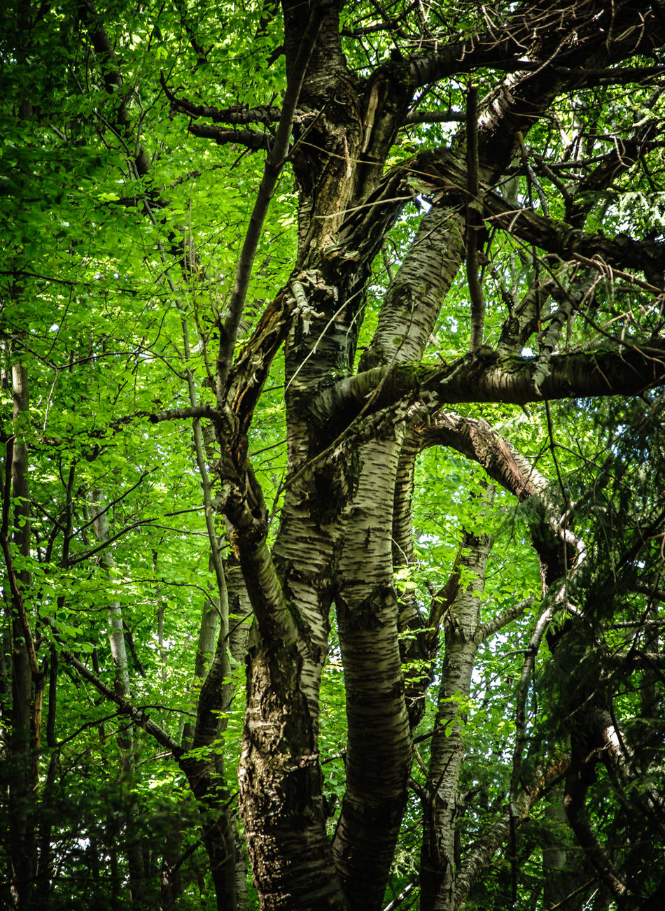 Beauty In Nature Branch Forest Green Color Growth Lush Foliage Nature No People Outdoors Tranquil Scene Tree Vitosha Mountain Sofia, Bulgaria