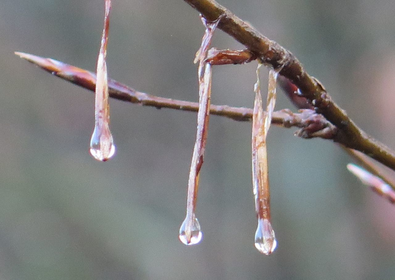 Macro Photography Nature Photography Naturelover Waterdrops Sunshine Forest Photography Trees And Nature Cold Days Detailed