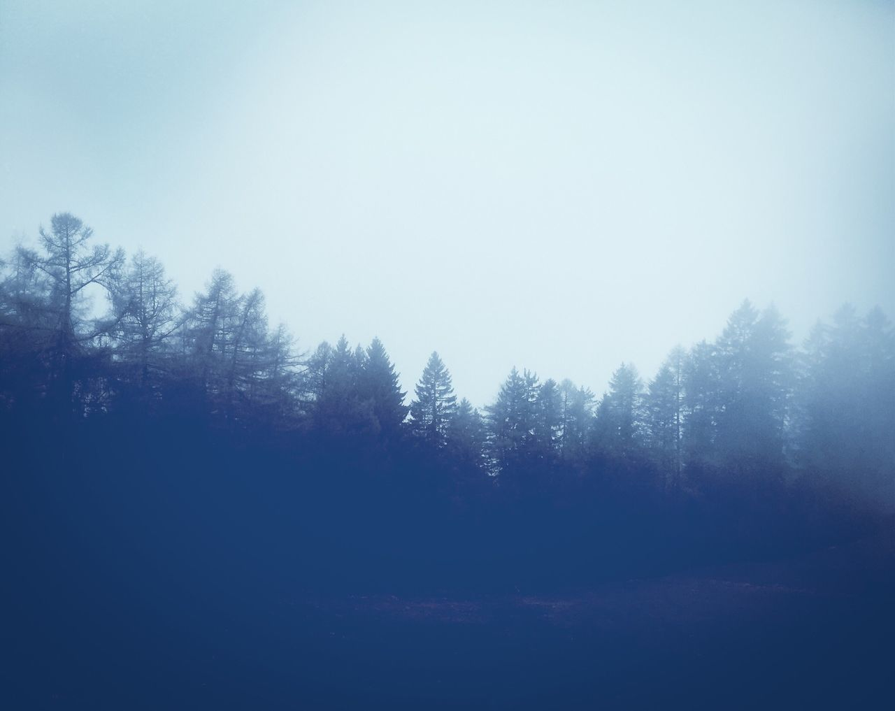Foggy forest Forest Fog Trees Nature Autumn Foogy Cold Fall Spring Grey Clouds Mysterious Dark Blue Silhouette Mountains Austria Italien Tyrol Mystery Spooky Landscape Cool Winter Spring