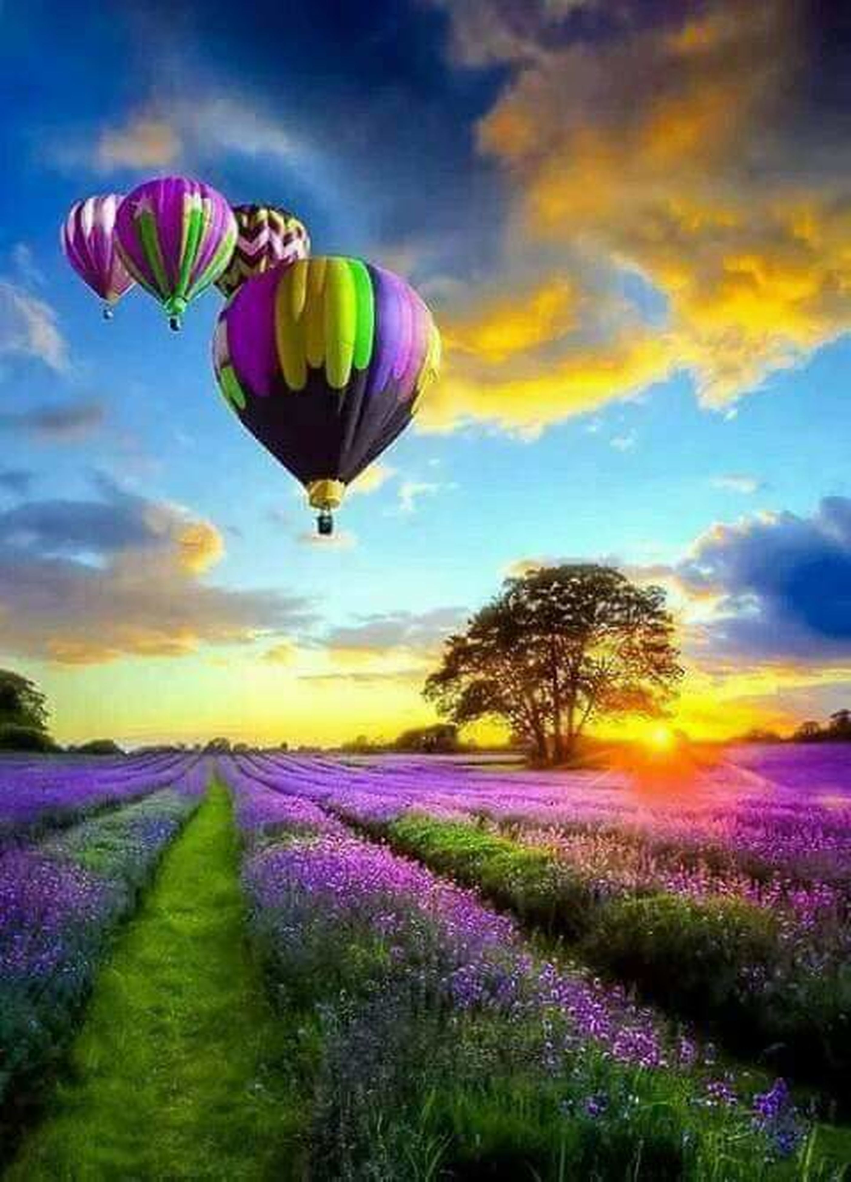 purple, flower, multi colored, cloud - sky, field, nature, sunset, sky, agriculture, beauty in nature, rural scene, scenics, outdoors, hot air balloon, dramatic sky, plant, landscape, tranquil scene, summer, sunlight, growth, no people, flying, springtime, grass, day, flower head