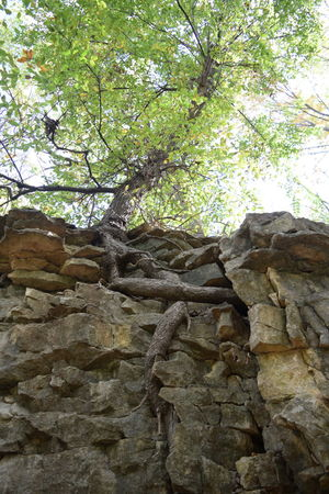 Tree Low Angle View Branch Architecture Stone Wall Growth Sky Outdoors Day Weathered Nature Green Color No People Rugged Rock Formation Tall History