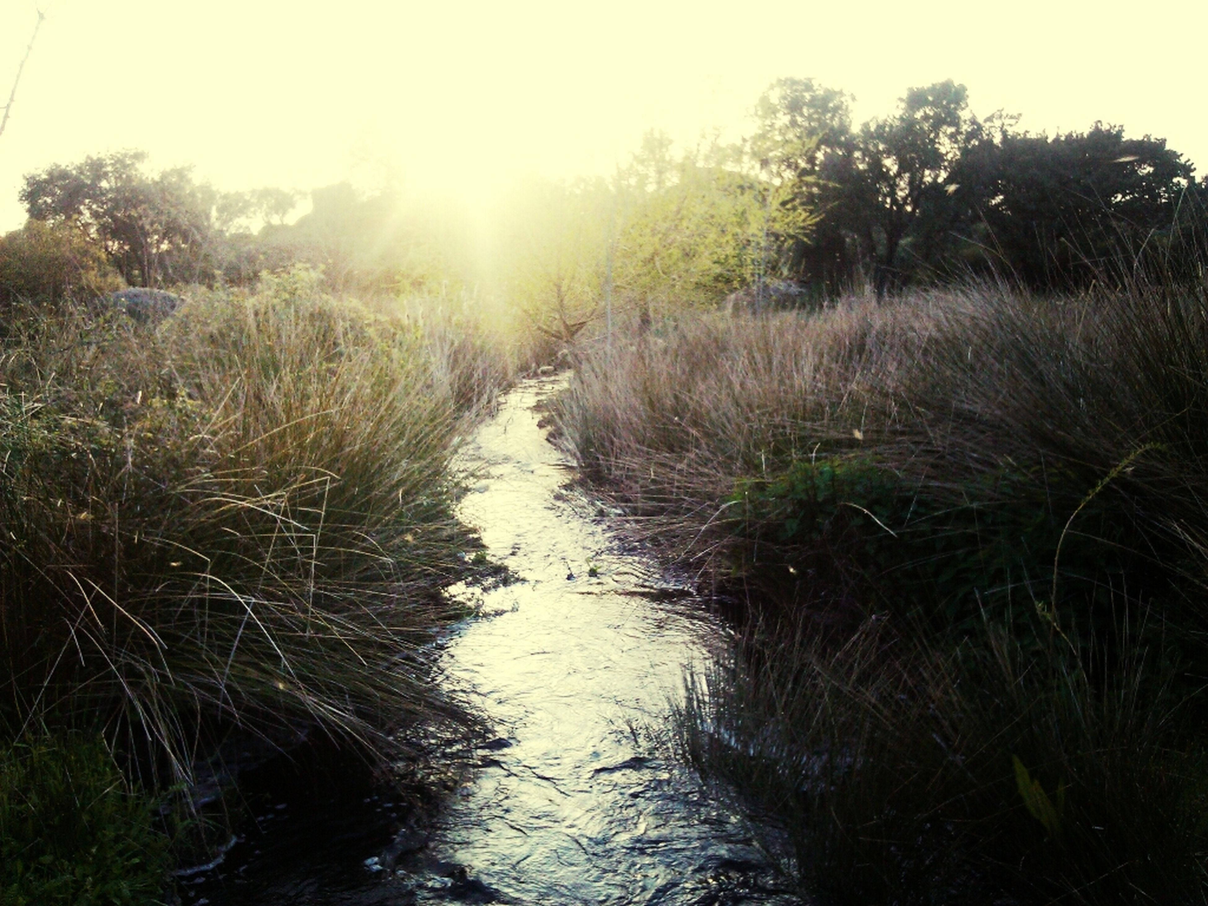 water, tranquility, tranquil scene, reflection, sun, tree, grass, nature, sunlight, growth, beauty in nature, scenics, plant, lake, sky, stream, sunbeam, river, outdoors, day
