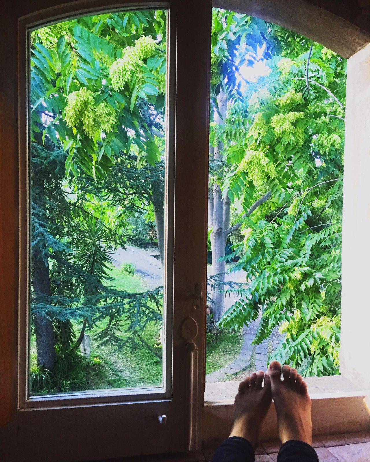 Sommergefühle Window Personal Perspective Low Section One Person Human Leg Indoors  Plant Real People Barefoot Tree Growth Human Body Part Day Green Color Lifestyles Nature Close-up Water People Adult Calm Tranquility Tranquil Scene