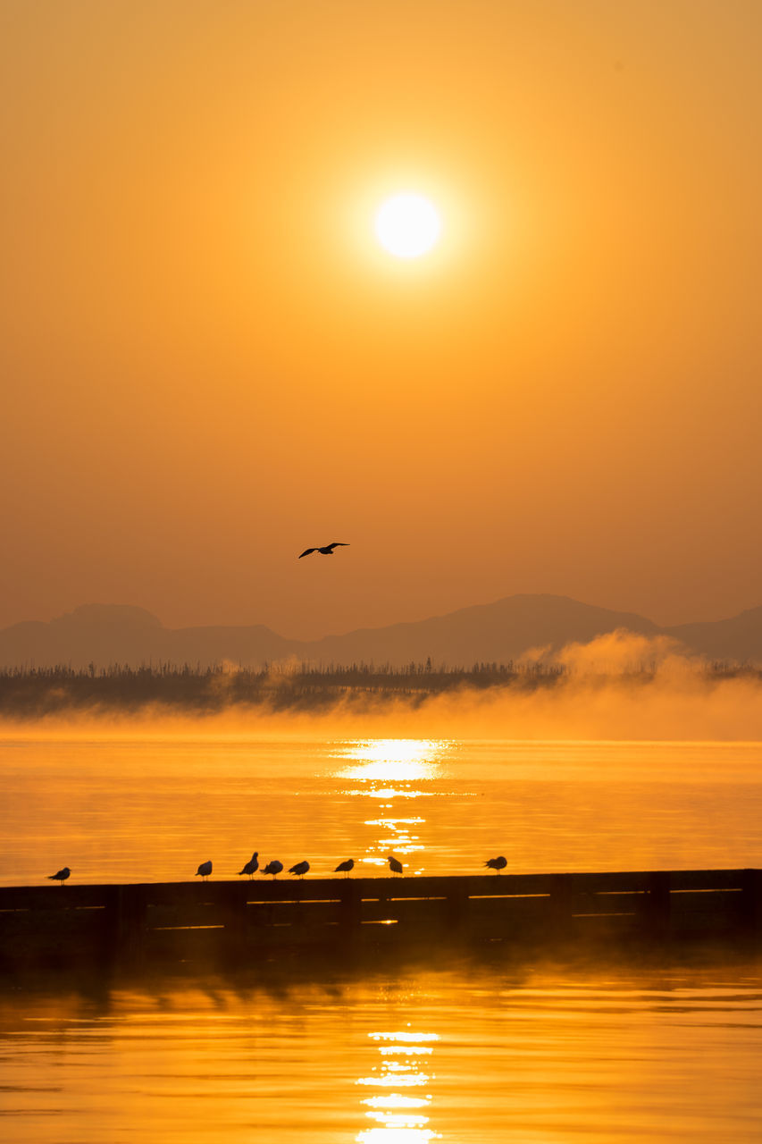 sunset, orange color, sun, beauty in nature, nature, water, scenics, sky, silhouette, bird, animals in the wild, animal themes, flying, tranquil scene, animal wildlife, no people, reflection, outdoors, tranquility, sunlight, sea, cloud - sky, mid-air, spread wings