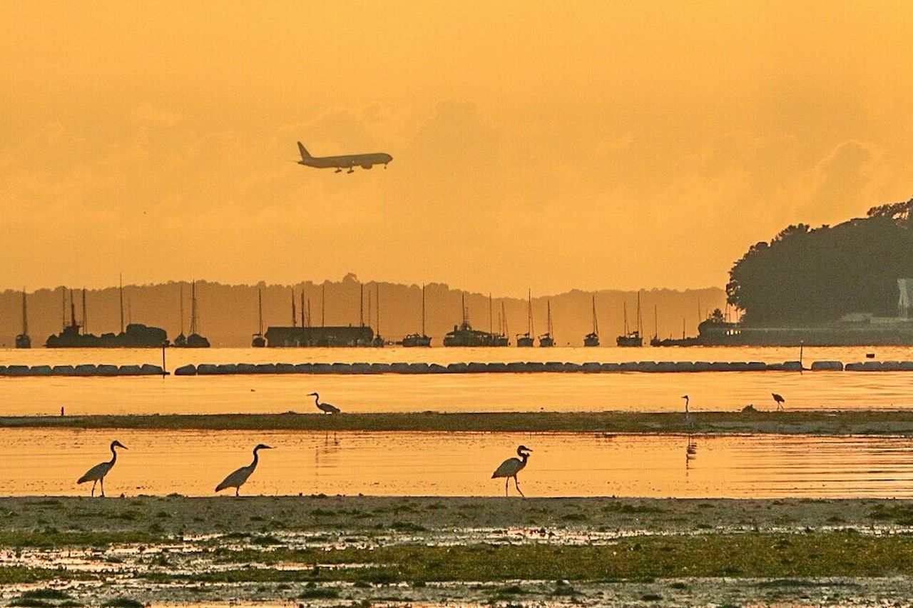 Thrill of travelling. Photography 43GoldenMoments Colourful Singapore Orange Color Golden Sky Beachphotography Sunrise And Clouds Sunrise Silhouette Sunrise_sunsets_aroundworld Sunrise_Collection Sunrise Beach Singapore City Plane Silhouette Birds Nature Water Birds_collection Pasir Ris Pasir Ris Park
