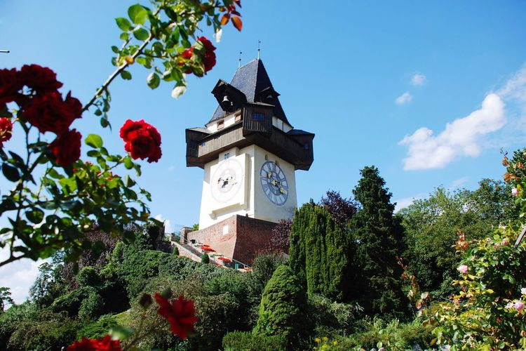 Tree Low Angle View No People Sky Day Growth Architecture Flower Cloud - Sky Outdoors Clock Tower Built Structure Plant Building Exterior Branch Beauty In Nature Bell Tower Nature Graz Austria Uhrturm Landmark