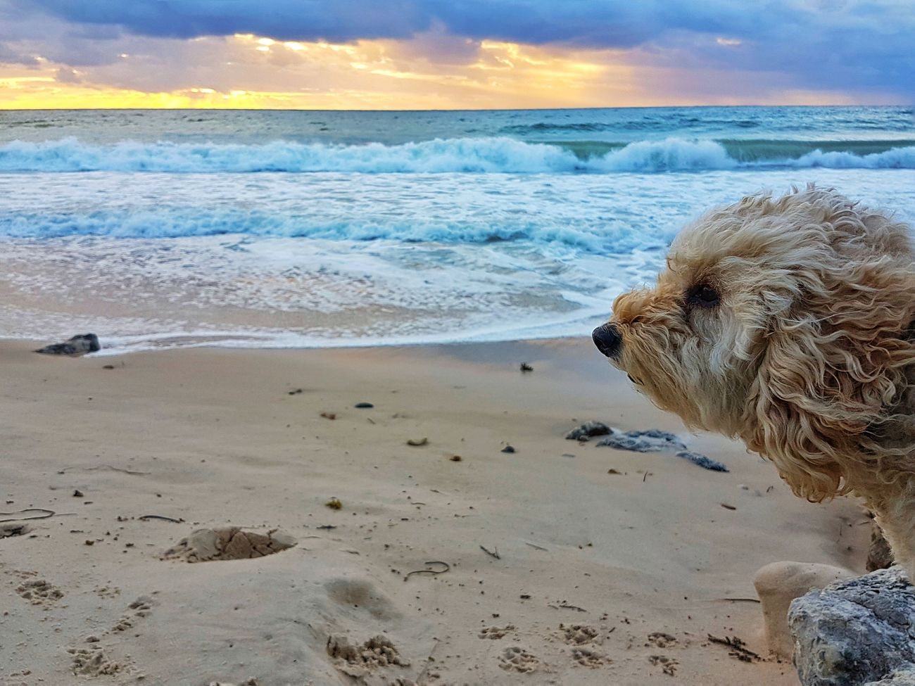 Beach Waves And Rocks Sea Sunset Poodle Focus On Foreground Beachphotography Selective Focus Enjoying The Beach I Love My Dog Sand Clouds And Sky Horizon Over Water