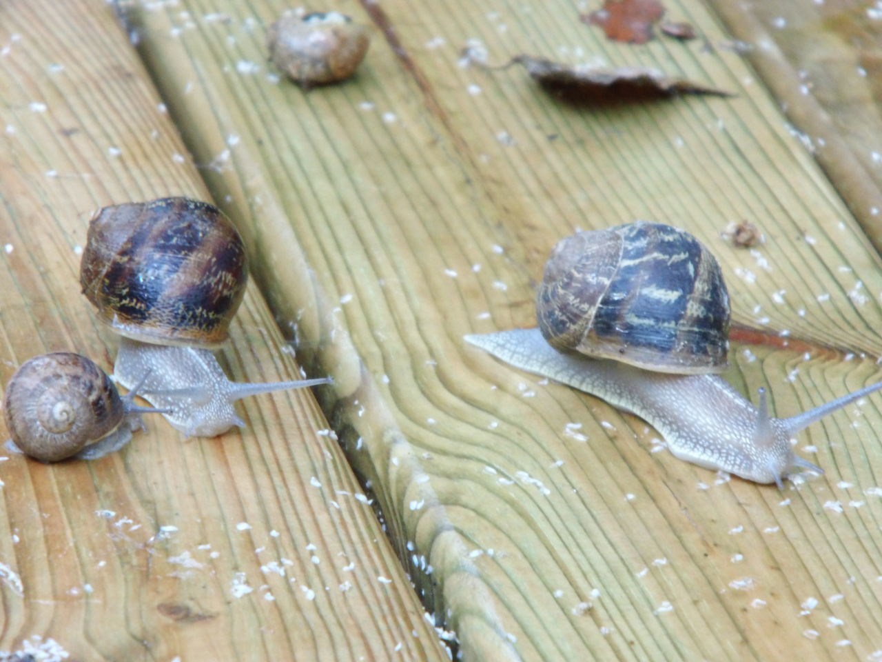 animal themes, animal shell, snail, one animal, animals in the wild, wildlife, close-up, animal wildlife, no people, nature, day, leaf, outdoors, fragility, sea life, tortoise shell