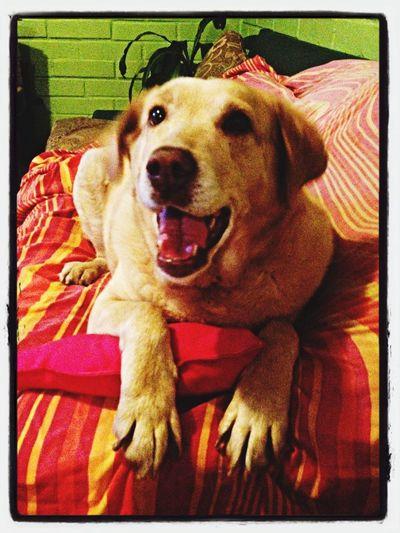 La Manu Dog Chile Cute Animals
