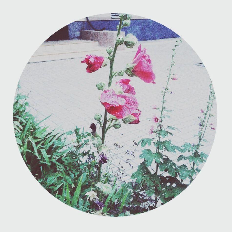 Nature Flowers Taking Photos Hello World