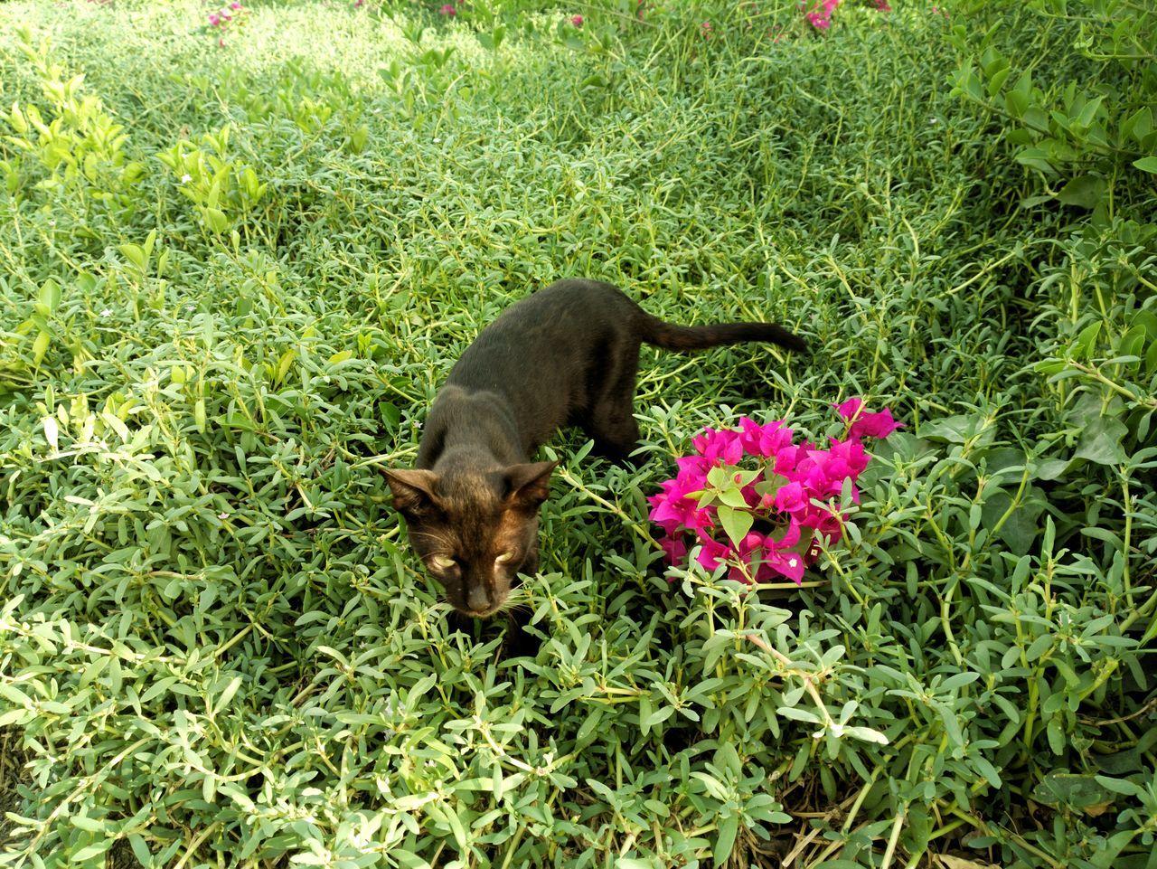 BLackCat Animals In The Wild TheWeekOnEyeEM Grass